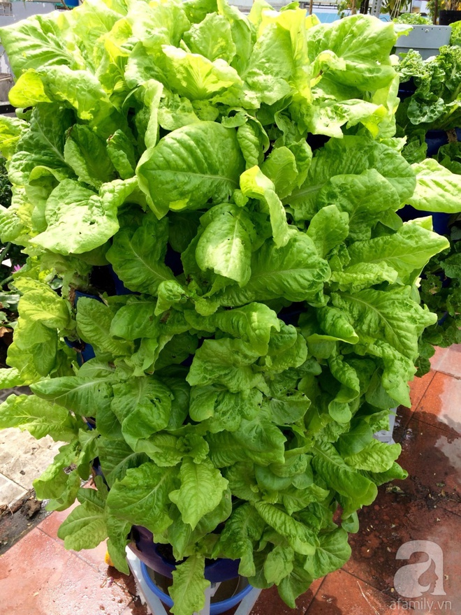 Choáng ngợp trước khu vườn trên sân thượng đầy rau sạch, gà ngon của anh chồng đảm Sài Thành - Ảnh 4.