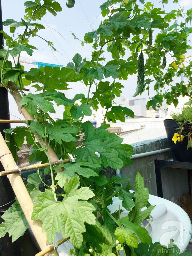 Choáng ngợp trước khu vườn trên sân thượng đầy rau sạch, gà ngon của anh chồng đảm Sài Thành - Ảnh 7.