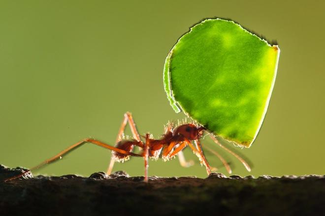 Không thể tin nổi: Cả thành phố khổng lồ của kiến sâu 8m, rộng 46m2 dưới lòng đất - Ảnh 6.