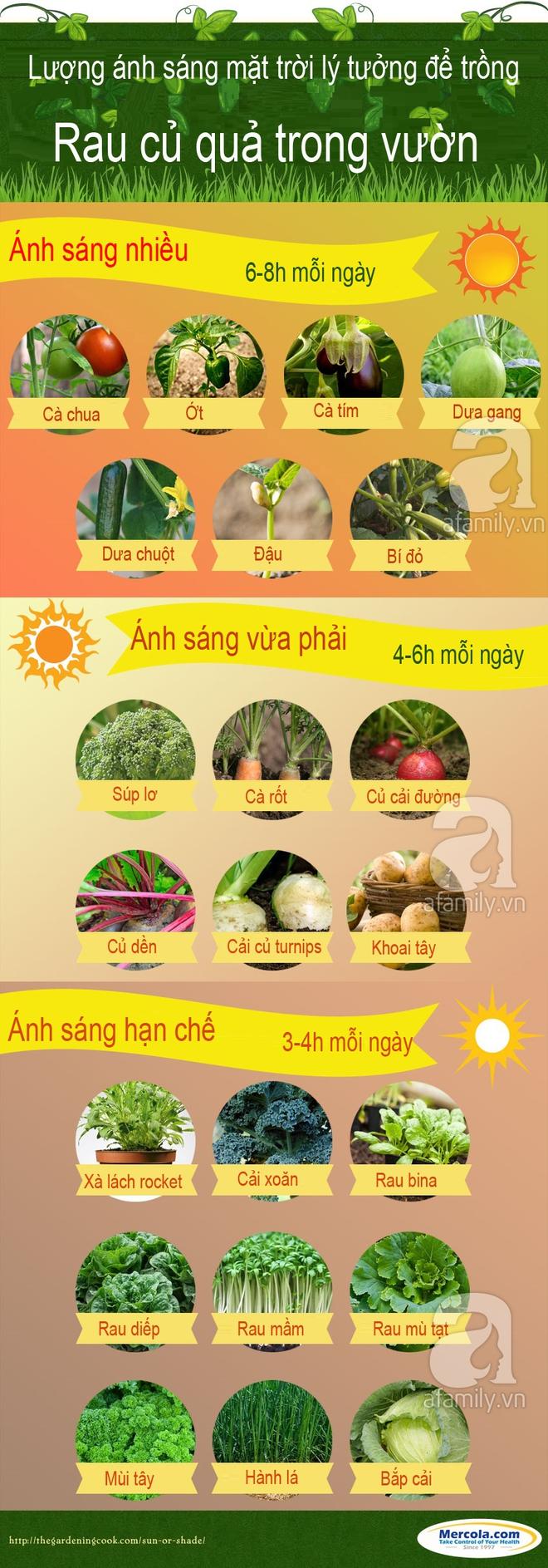 Đây chính là lượng ánh nắng mặt trời lý tưởng để vườn rau quả nhà bạn lúc nào cũng xanh tốt - Ảnh 1.
