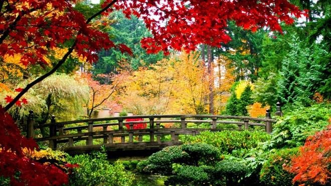 Xem những hình ảnh này mới thấy mùa thu ở đâu cũng đẹp không lời nào tả hết - Ảnh 4.