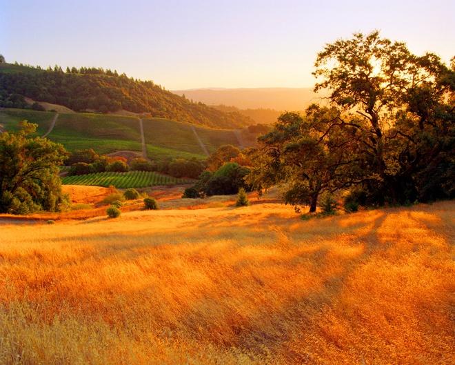Xem những hình ảnh này mới thấy mùa thu ở đâu cũng đẹp không lời nào tả hết - Ảnh 7.