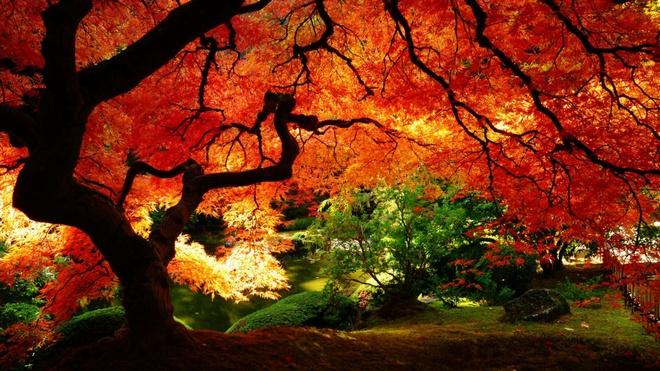 Xem những hình ảnh này mới thấy mùa thu ở đâu cũng đẹp không lời nào tả hết - Ảnh 9.