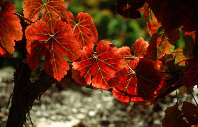 Xem những hình ảnh này mới thấy mùa thu ở đâu cũng đẹp không lời nào tả hết - Ảnh 11.