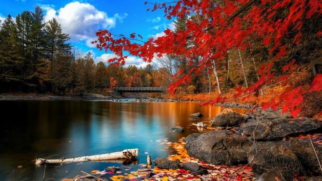 Xem những hình ảnh này mới thấy mùa thu ở đâu cũng đẹp không lời nào tả hết - Ảnh 14.