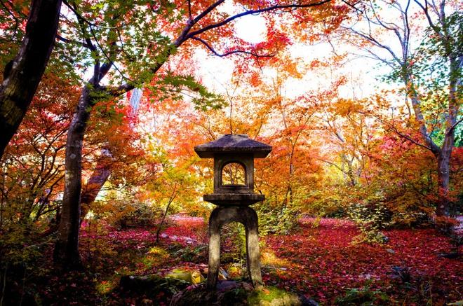 Xem những hình ảnh này mới thấy mùa thu ở đâu cũng đẹp không lời nào tả hết - Ảnh 15.