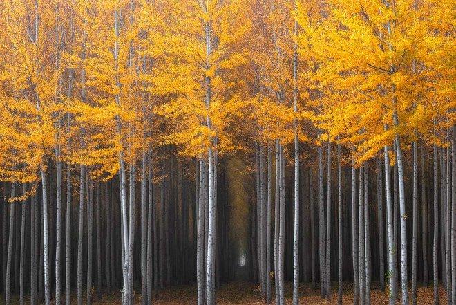 '. Xem những hình ảnh này mới thấy mùa thu ở đâu cũng đẹp không lời nào tả hết .'