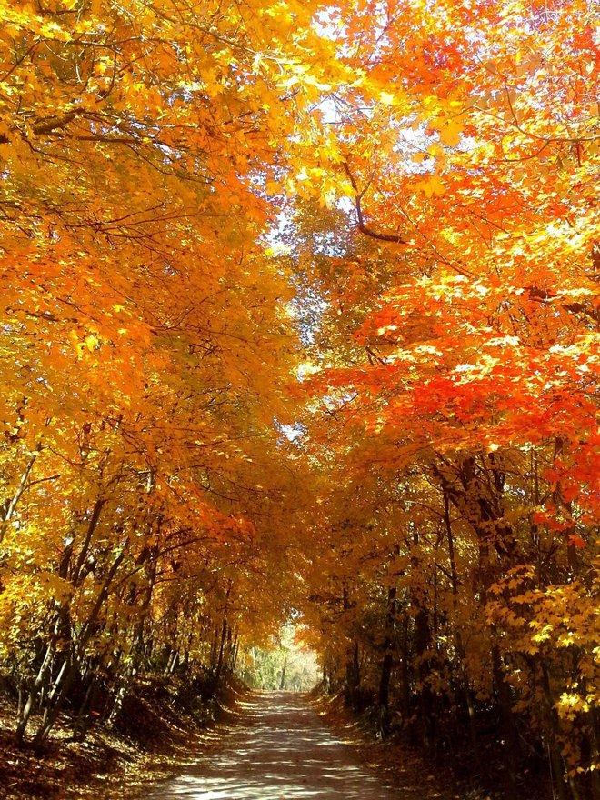 Xem những hình ảnh này mới thấy mùa thu ở đâu cũng đẹp không lời nào tả hết - Ảnh 18.
