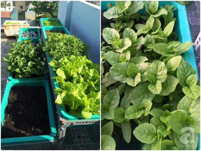 Hàng ngày tiếp xúc với bệnh nhân ung thư, nữ dược sĩ quyết trồng 100 chậu rau sạch xanh trên sân thượng cho gia đình - Ảnh 2.