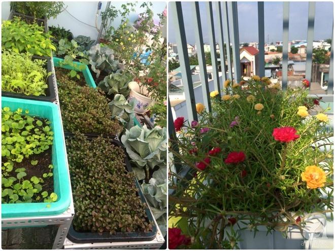 Hàng ngày tiếp xúc với bệnh nhân ung thư, nữ dược sĩ quyết trồng 100 chậu rau sạch xanh trên sân thượng cho gia đình - Ảnh 3.