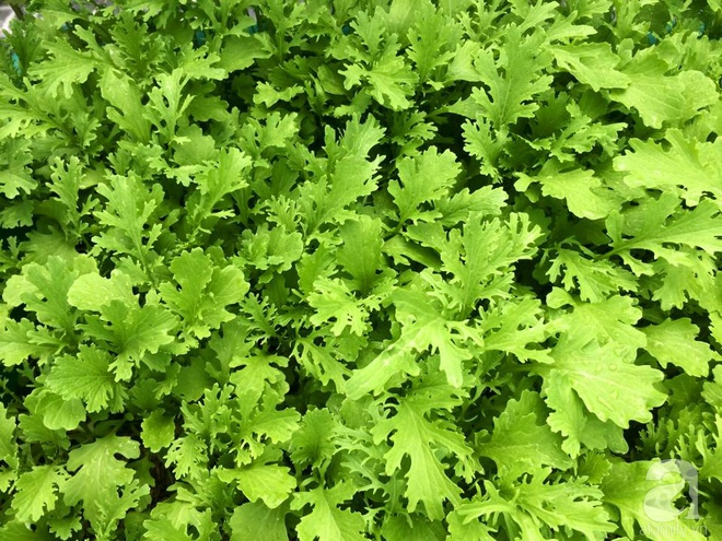 Hàng ngày tiếp xúc với bệnh nhân ung thư, nữ dược sĩ quyết trồng 100 chậu rau sạch xanh trên sân thượng cho gia đình - Ảnh 4.