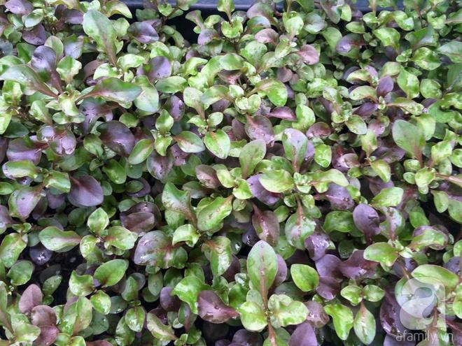 Hàng ngày tiếp xúc với bệnh nhân ung thư, nữ dược sĩ quyết trồng 100 chậu rau sạch xanh trên sân thượng cho gia đình - Ảnh 6.