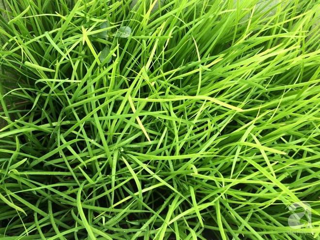 Hàng ngày tiếp xúc với bệnh nhân ung thư, nữ dược sĩ quyết trồng 100 chậu rau sạch xanh trên sân thượng cho gia đình - Ảnh 8.