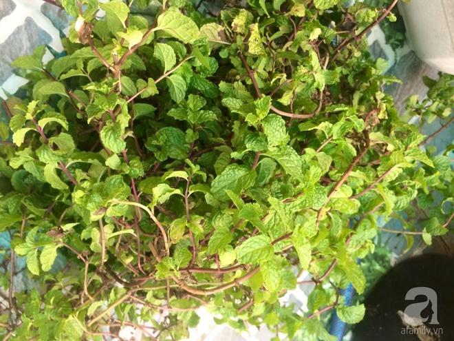 Hàng ngày tiếp xúc với bệnh nhân ung thư, nữ dược sĩ quyết trồng 100 chậu rau sạch xanh trên sân thượng cho gia đình - Ảnh 12.