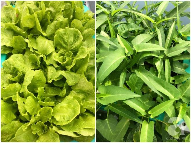 Hàng ngày tiếp xúc với bệnh nhân ung thư, nữ dược sĩ quyết trồng 100 chậu rau sạch xanh trên sân thượng cho gia đình - Ảnh 20.