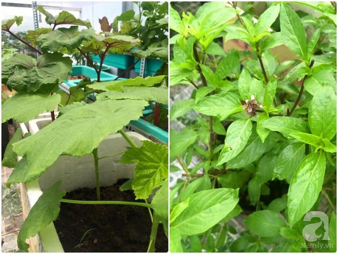Hàng ngày tiếp xúc với bệnh nhân ung thư, nữ dược sĩ quyết trồng 100 chậu rau sạch xanh trên sân thượng cho gia đình - Ảnh 28.