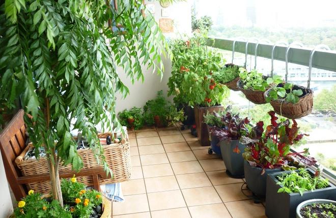 Ban công nhỏ biến thành khu vườn xanh mát đẹp hút ánh nhìn với những ý tưởng đơn giản không ngờ - Ảnh 5.