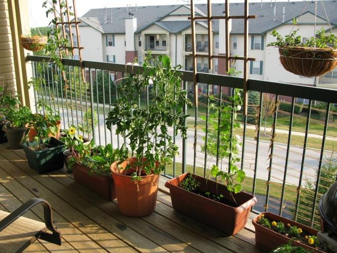 Ban công nhỏ biến thành khu vườn xanh mát đẹp hút ánh nhìn với những ý tưởng đơn giản không ngờ - Ảnh 7.