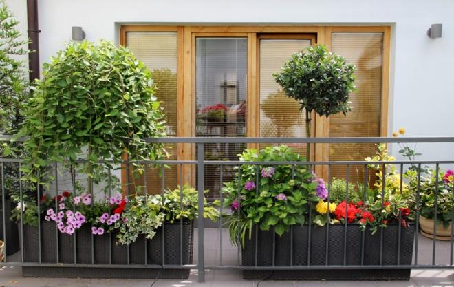 Ban công nhỏ biến thành khu vườn xanh mát đẹp hút ánh nhìn với những ý tưởng đơn giản không ngờ - Ảnh 13.
