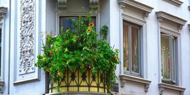 Ban công nhỏ biến thành khu vườn xanh mát đẹp hút ánh nhìn với những ý tưởng đơn giản không ngờ - Ảnh 17.