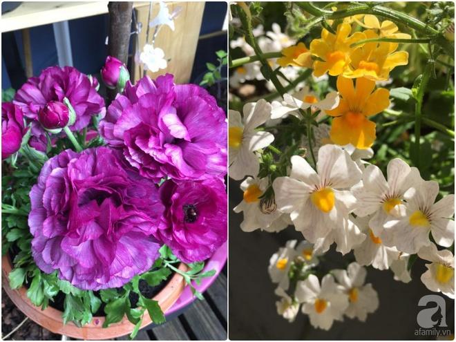 Bất ngờ với ban công chưa đầy 2m² nhưng dâu tây sai trĩu cành, hoa tươi thơm ngát - Ảnh 5.