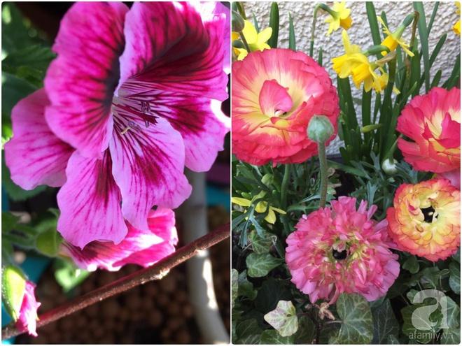 Bất ngờ với ban công chưa đầy 2m² nhưng dâu tây sai trĩu cành, hoa tươi thơm ngát - Ảnh 7.