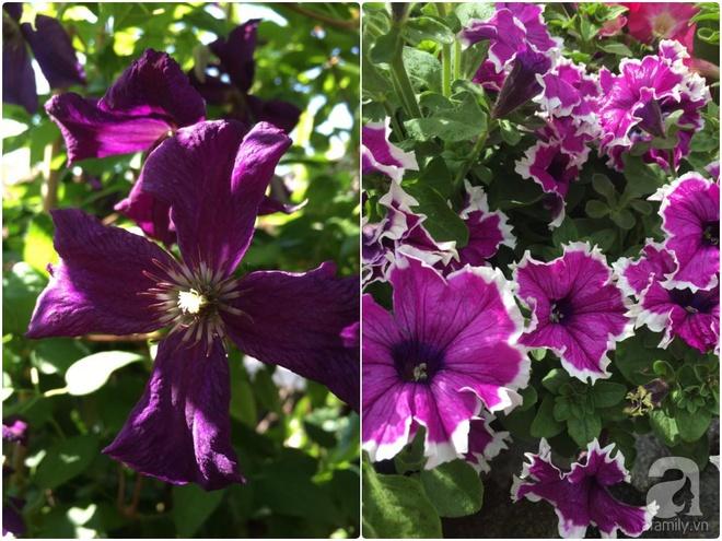 Bất ngờ với ban công chưa đầy 2m² nhưng dâu tây sai trĩu cành, hoa tươi thơm ngát - Ảnh 9.