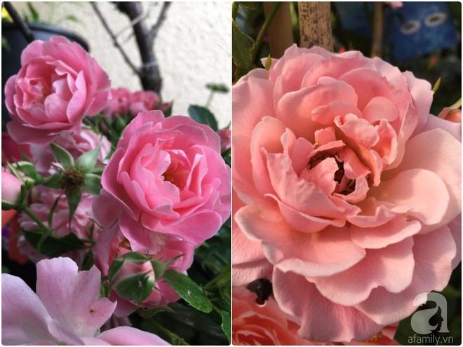 Bất ngờ với ban công chưa đầy 2m² nhưng dâu tây sai trĩu cành, hoa tươi thơm ngát - Ảnh 13.
