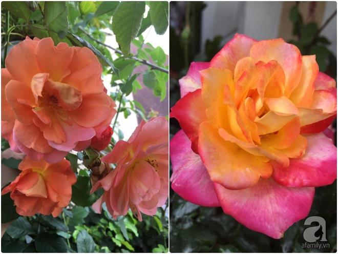 Bất ngờ với ban công chưa đầy 2m² nhưng dâu tây sai trĩu cành, hoa tươi thơm ngát - Ảnh 15.