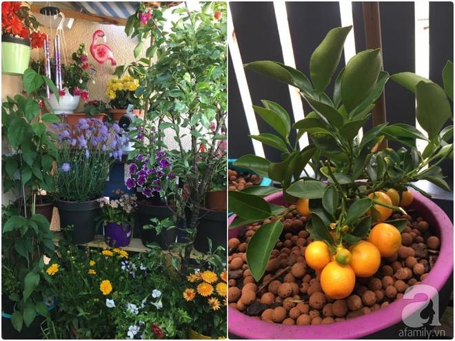 Bất ngờ với ban công chưa đầy 2m² nhưng dâu tây sai trĩu cành, hoa tươi thơm ngát - Ảnh 22.