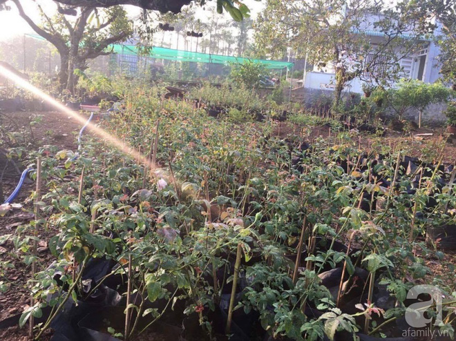 Khu vườn hoa hồng 2000 gốc gây thương nhớ cho bất cứ ai của chàng trai 9x ở Đồng Nai - Ảnh 3.