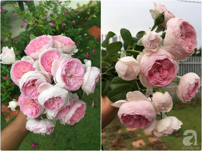 Khu vườn hoa hồng 2000 gốc gây thương nhớ cho bất cứ ai của chàng trai 9x ở Đồng Nai - Ảnh 16.