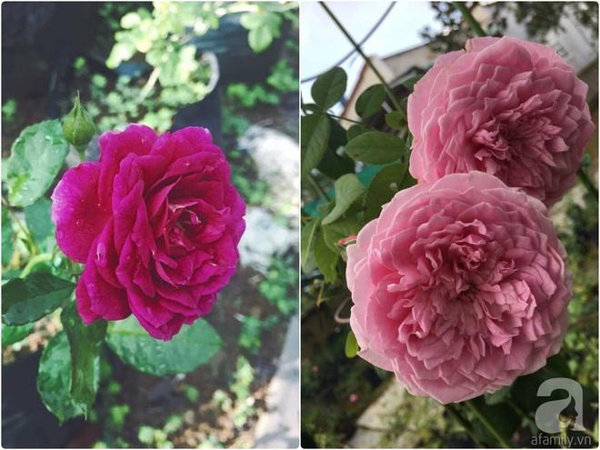 Khu vườn hoa hồng 2000 gốc gây thương nhớ cho bất cứ ai của chàng trai 9x ở Đồng Nai - Ảnh 22.