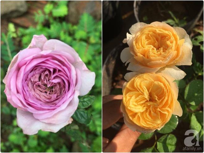 Khu vườn hoa hồng 2000 gốc gây thương nhớ cho bất cứ ai của chàng trai 9x ở Đồng Nai - Ảnh 23.