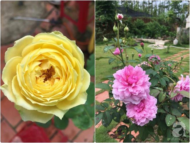 Khu vườn hoa hồng 2000 gốc gây thương nhớ cho bất cứ ai của chàng trai 9x ở Đồng Nai - Ảnh 25.
