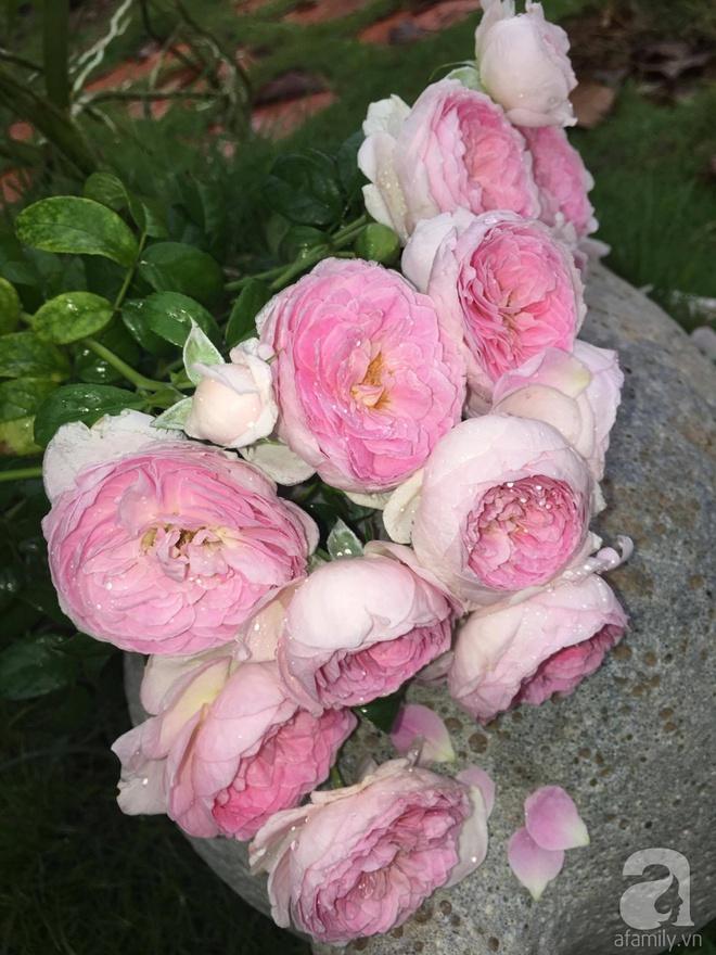 Khu vườn hoa hồng 2000 gốc gây thương nhớ cho bất cứ ai của chàng trai 9x ở Đồng Nai - Ảnh 28.