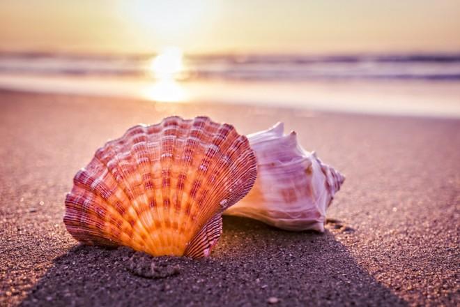 Nhặt được vỏ sò trên biển, cả gia đình tròn mắt ngạc nhiên khi lật mặt dưới lên - Ảnh 1.