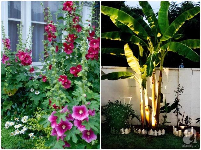 Nữ bác sỹ Việt tự tay cải tạo nhà cấp 4 rộng 600m² đầy cỏ hoang thành ngôi nhà vườn đáng mơ ước - Ảnh 24.