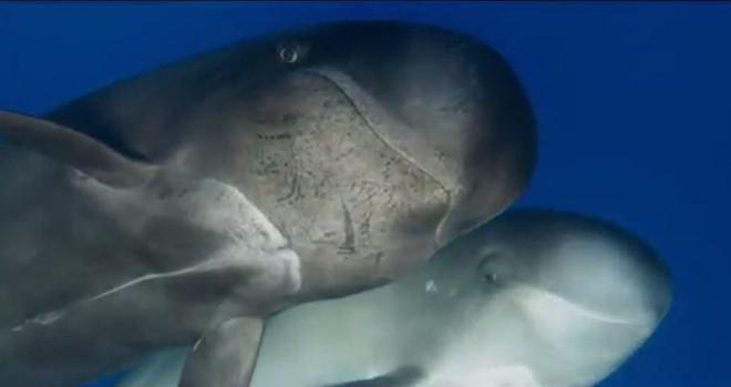 Xuống lòng đại dương sâu thẳm khám phá những sinh vật kỳ lạ như ở ngoài hành tinh - Ảnh 1.