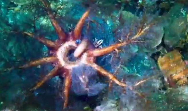 Xuống lòng đại dương sâu thẳm khám phá những sinh vật kỳ lạ như ở ngoài hành tinh - Ảnh 2.