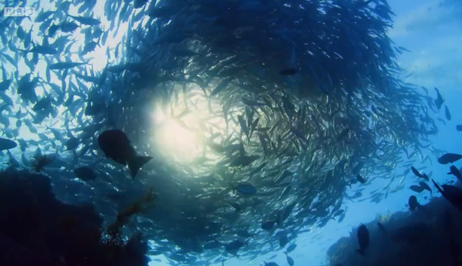 Xuống lòng đại dương sâu thẳm khám phá những sinh vật kỳ lạ như ở ngoài hành tinh - Ảnh 5.