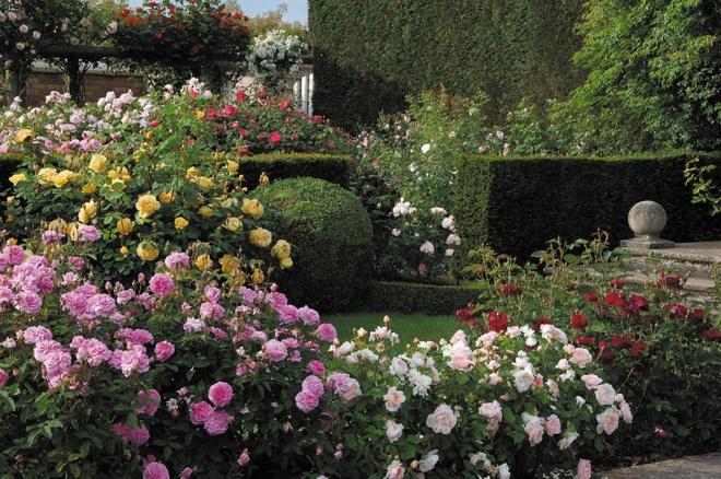 Khu vườn hoa hồng đẹp hơn cổ tích của người đàn ông được phong danh là Vĩ nhân hoa hồng của thế giới - Ảnh 13.