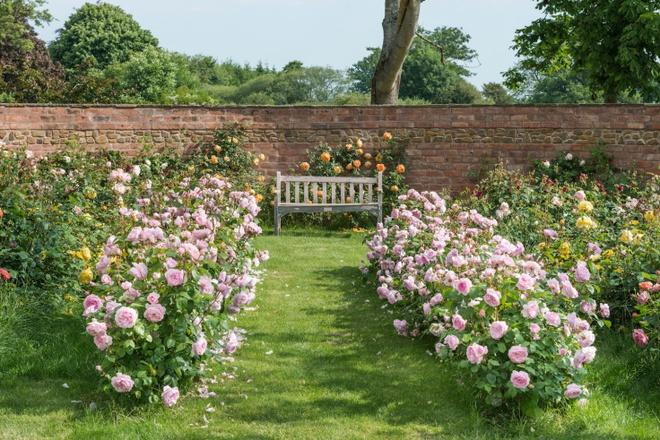 Khu vườn hoa hồng đẹp hơn cổ tích của người đàn ông được phong danh là Vĩ nhân hoa hồng của thế giới - Ảnh 14.