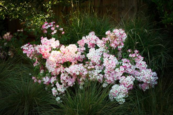 7 loài hoa hồng leo đẹp như những vũ công quyến rũ nên có mặt trong vườn của bạn - Ảnh 24.