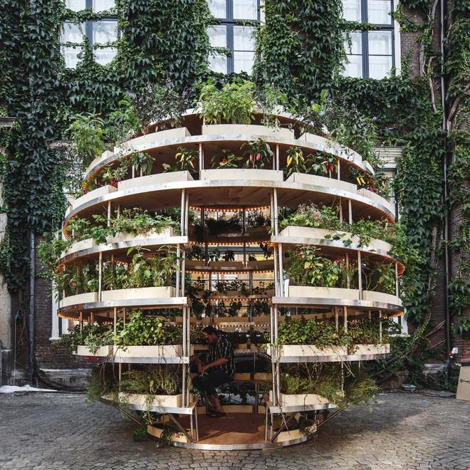 Khu vườn mini bằng gỗ giúp công cuộc trồng rau sạch trong nhà của nông dân phố dễ dàng hơn - Ảnh 4.