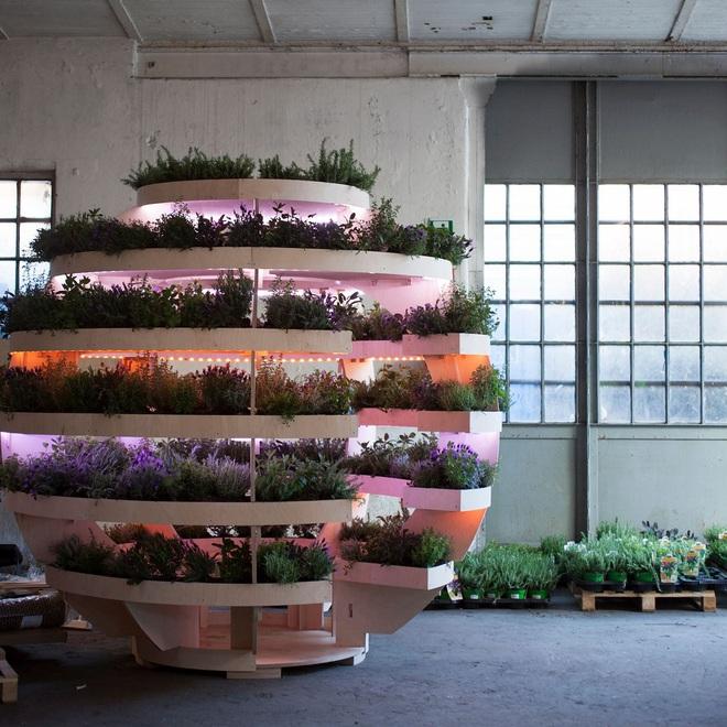 Khu vườn mini bằng gỗ giúp công cuộc trồng rau sạch trong nhà của nông dân phố dễ dàng hơn - Ảnh 5.