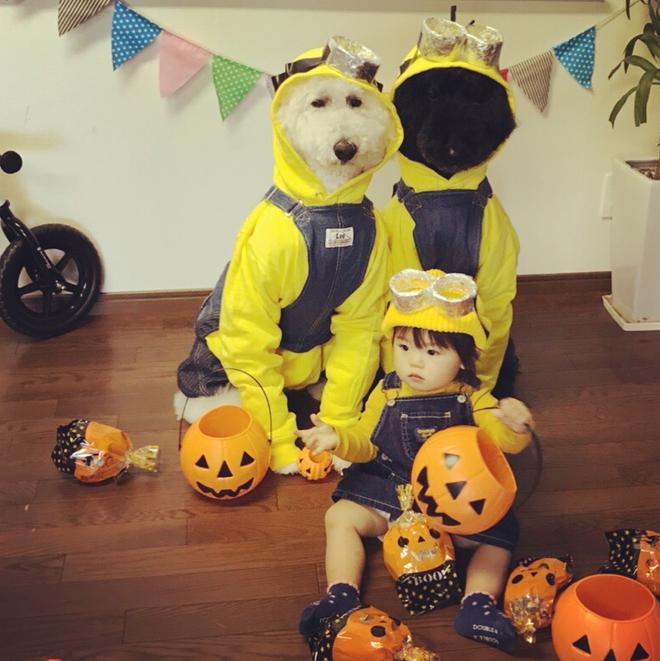 Loạt ảnh hóa trang Halloween hoành tráng nhất mạng xã hội của bé gái Nhật và những người bạn thú cưng - Ảnh 8.