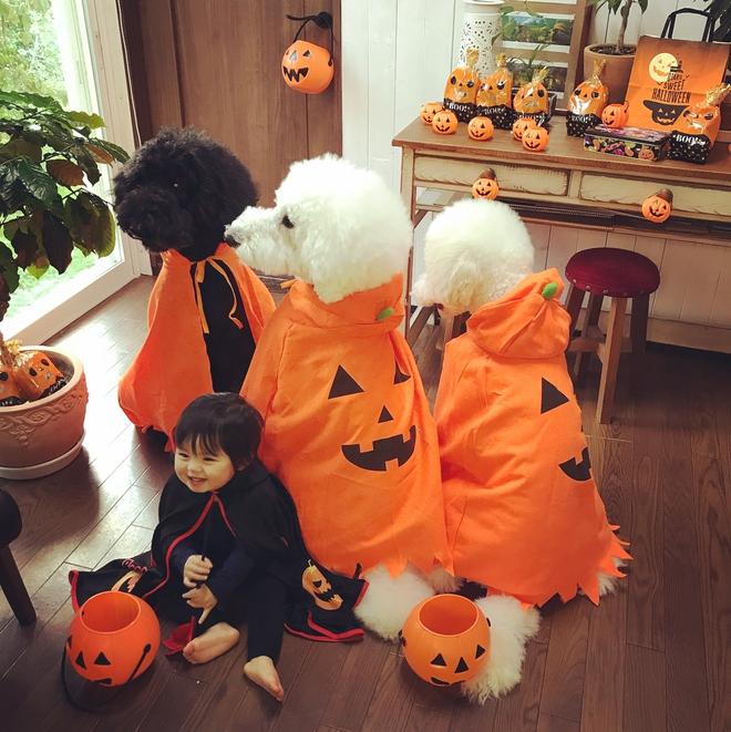 Loạt ảnh hóa trang Halloween hoành tráng nhất mạng xã hội của bé gái Nhật và những người bạn thú cưng - Ảnh 15.