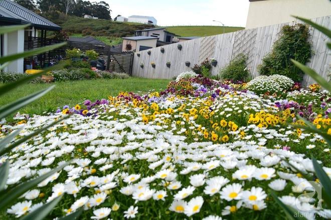 Người phụ nữ Việt tự tay biến khu vườn 700m² đầy cỏ dại thành một thảm hoa cúc dịu dàng - Ảnh 5.