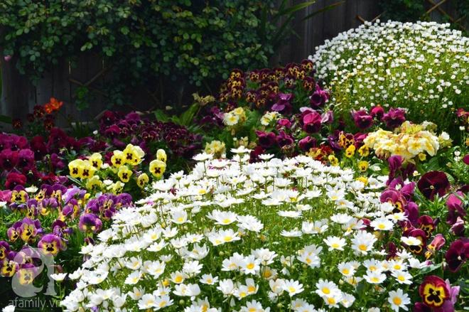 Người phụ nữ Việt tự tay biến khu vườn 700m² đầy cỏ dại thành một thảm hoa cúc dịu dàng - Ảnh 6.